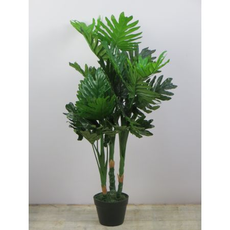 Philodendron 100cm